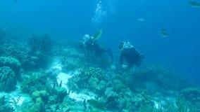 人潜水的加勒比海水下的1080P录影 股票视频