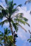 人爬棕榈树 免版税库存图片