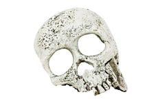 人特写镜头的头骨在白色背景的 免版税图库摄影