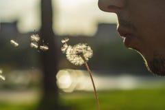 人用在blured绿草,室外夏天的自然的蒲公英 库存照片