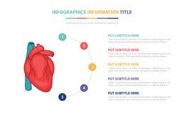 人的与五点的心脏解剖学infographic模板概念列出和各种各样的颜色有干净的现代白色背景- 向量例证