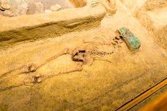 人的埋葬的考古学挖掘 免版税图库摄影