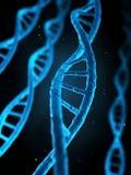 人的基因 库存例证