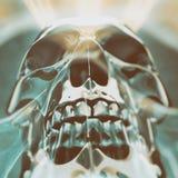 人的头骨艺术图象 图库摄影