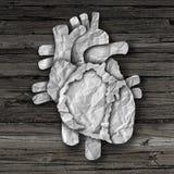 人的心脏器官概念 库存图片