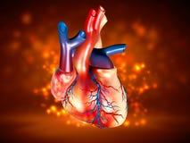 人的心脏 免版税库存照片