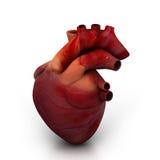 人的心脏 免版税库存图片