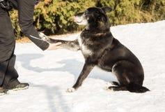 人的手和一条狗在雪 库存照片