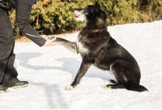 人的手和一条狗在雪 库存图片