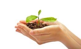 人的手和植物 图库摄影