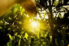 人的手拿着想法的电灯泡成功的或太阳 免版税库存图片