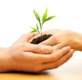 人的手用植物新芽 免版税库存照片