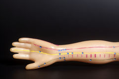 人的手医疗针灸模型在黑色的 库存图片