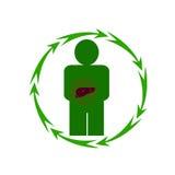 人的肝脏处于危险中 免版税库存图片