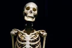人的解剖学真正的骨骼 免版税库存照片