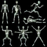 人的骨骼的汇集 免版税库存图片