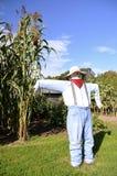 人的稻草人在玉米附近一种硕大高剧情站立 库存图片