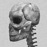 人的头骨剪影 免版税库存图片