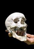 人的头骨在手边10 库存照片