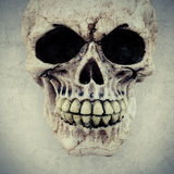 人的头骨 图库摄影