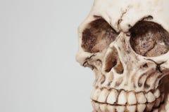 人的头骨 免版税库存图片