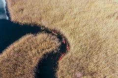 人皮船的在秋天河的芦苇中 图库摄影