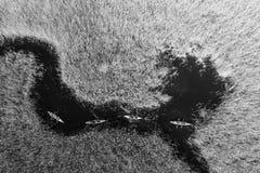 人皮船的在秋天河的芦苇中 免版税库存图片