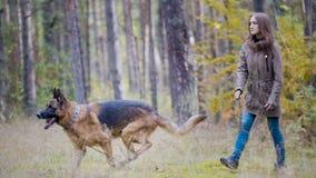 年轻人相当可爱的妇女使用与她的宠物的-德国牧羊犬-走在秋天森林-女孩投掷狗 图库摄影