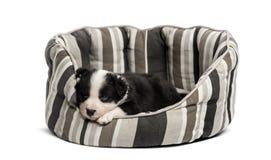 年轻人睡觉在小儿床的杂种小狗 免版税图库摄影
