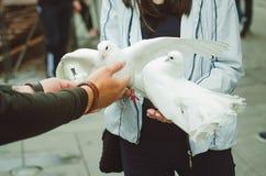 人给女孩在他的胳膊的两只白色鸠 游人的娱乐在市圣彼德堡 免版税库存图片