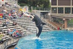 人群凶手嘴seaworld喷洒的鲸鱼 库存图片