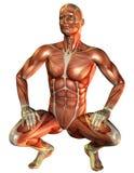 人肌肉蹲研究 库存照片