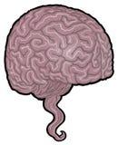 人脑例证 免版税库存图片