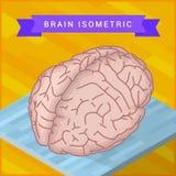 人脑平的等量象 库存图片