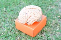 人脑模型 免版税库存照片
