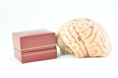 人脑模型 库存图片