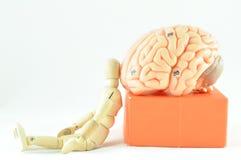 人脑模型 库存照片