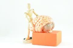 人脑模型 免版税图库摄影
