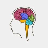 人脑的传染媒介图象 库存图片