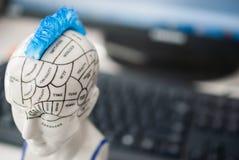 人脑的部分和每个部分的作用 在背景中有显示器和键盘 免版税图库摄影