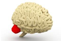 人脑 免版税图库摄影
