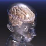 人脑 库存照片
