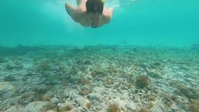人自由潜水在水面下与鱼GoPro Hero7 股票视频