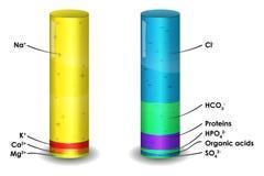 人血等离子离子构成 库存例证