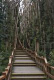 人行桥在森林里 免版税库存图片