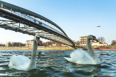 人行桥Ojca Bernatka -在维斯瓦河的桥梁在克拉科夫,波兰 免版税图库摄影