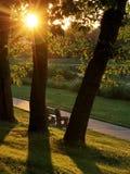 人行道和在金子阳光沐浴的公园长椅 免版税库存照片