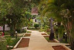 人行道在一个热带公园 图库摄影