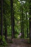 人行道在具球果落叶森林里 库存照片
