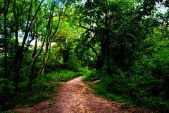 人行道在埃潘森林里 库存照片
